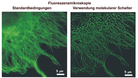 Cytoskeleton of a fixed cell. Left: Fluorescence image at standard conditions. Right: dSTORM image using molecular switches.