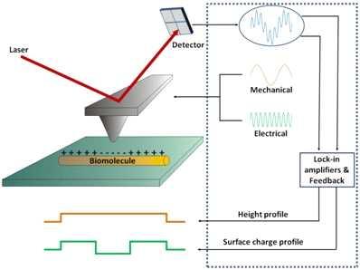 Kelvin Probe Force Microscopy schematic